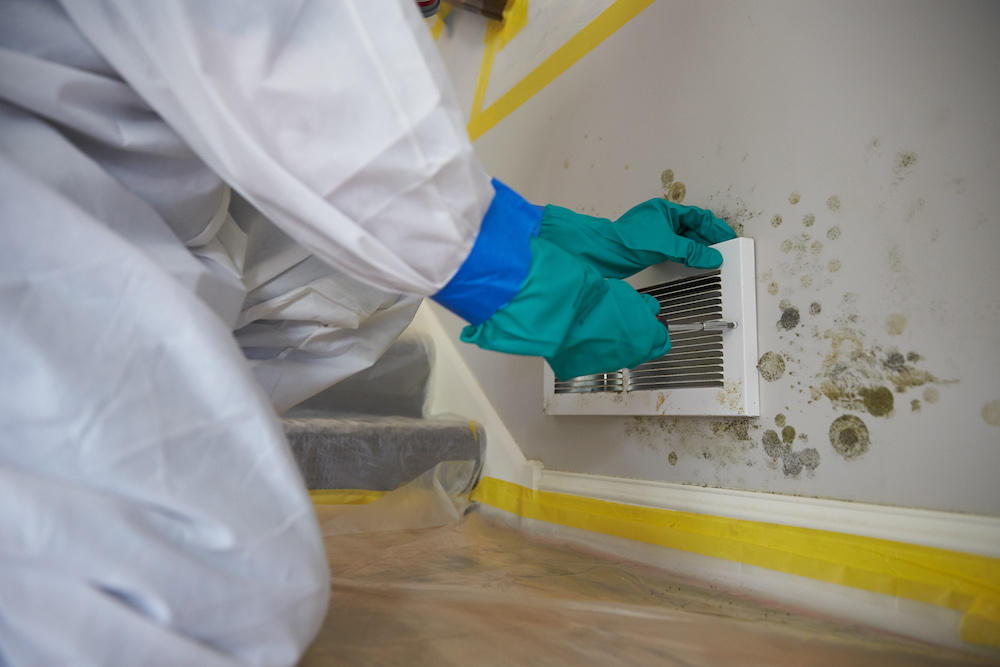 mold testing chicago